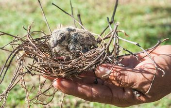 Nest with nestling in hand - image #337529 gratis