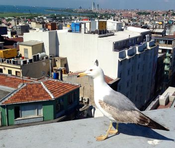Seagull on roof of building - Free image #337559