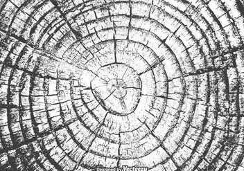 Free Tree Rings Vector Texture - Kostenloses vector #337709