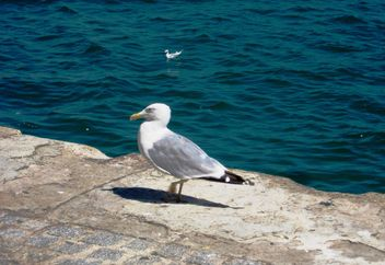 Seagull on pier at sea - image #337809 gratis