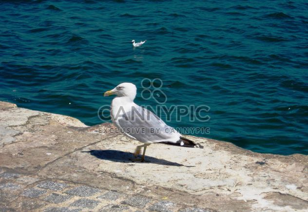 Seagull on pier at sea - Free image #337809