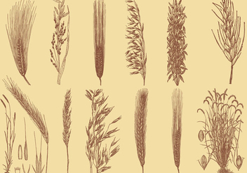 Old Style Drawing Grains - vector gratuit #337959