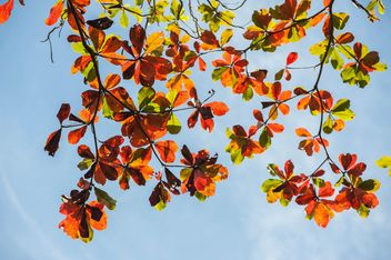 Colorful leaves on tree branches - image #338609 gratis