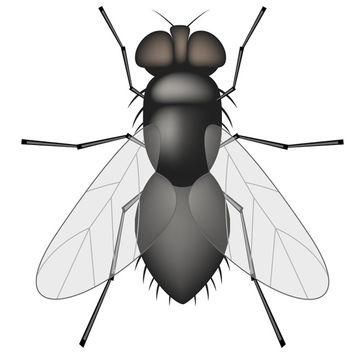 Vector Fly - Free vector #340229