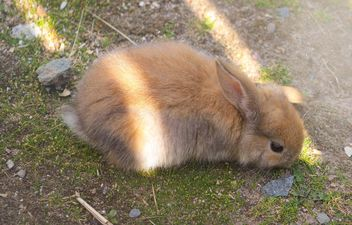 Cute bunny on ground - image #341289 gratis