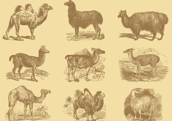 Alpacas And Camels - vector #342239 gratis