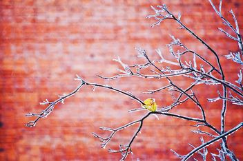 Branches in ice on red background - image #342579 gratis