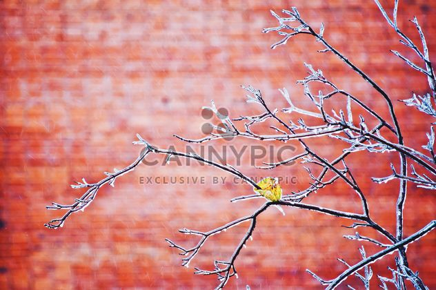 Branches in ice on red background - Free image #342579