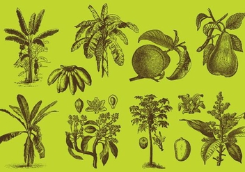 Fruit Trees drawings - vector gratuit #343669