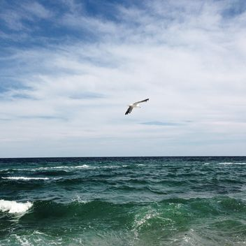 Seagull flying over the sea - image #343999 gratis