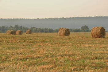 Field after harvest, Nature,vegetation - бесплатный image #344219