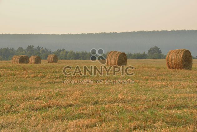 Field after harvest, Nature,vegetation - Free image #344219