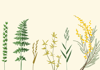 Botanic Illustrations - Free vector #345979