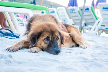 Alone dog lying on sandy beach - бесплатный image #346189