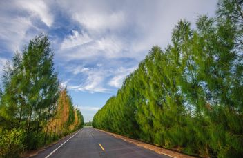 Country road with beautiful nature - бесплатный image #347199