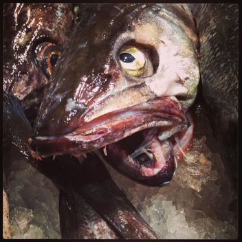 Closeup portrait of terrible fish - image gratuit #347719