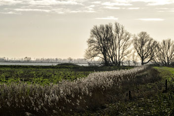 Sunlight in the reed, Tongplaat, Dordrecht - image gratuit #347859