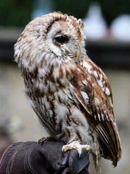 Owl sitting on human hand - image #348609 gratis