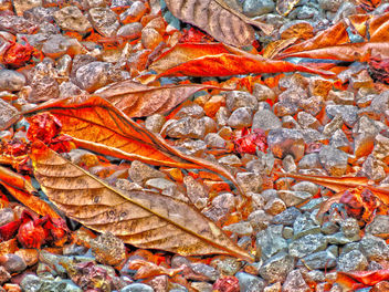 Leaves and Pebbles - Free image #350779