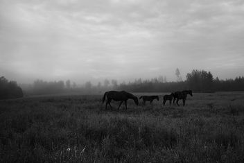 Horses At Dawn - image #355569 gratis