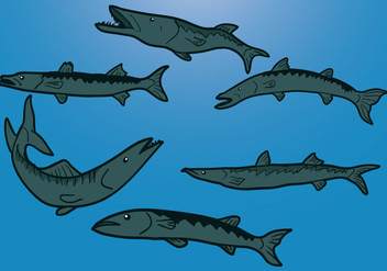 Barracuda Vector - vector #357479 gratis