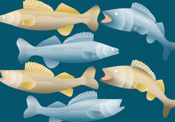 Walleye Fish Vectors - бесплатный vector #365039