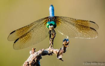 DragonFly - Kostenloses image #365199