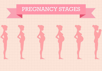 Free Pregnancy Stages Vector - бесплатный vector #365689