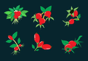 Rosehip Illustration Vector - vector gratuit #365709