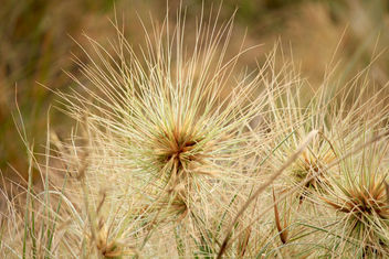 humble tumbleweed beginnings - Free image #365999