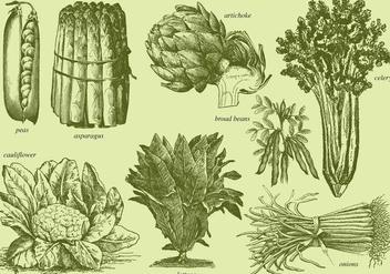 Old Style Drawing Vegetables - vector gratuit #366769