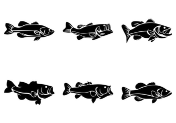 Bass Fish Vector - vector gratuit #370079