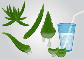 Fresh Healthy Maguey Drink Vector - vector gratuit #373709