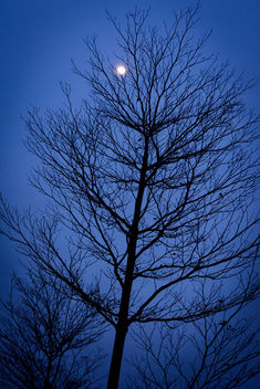 Trees in Moon Ligght - image #374289 gratis