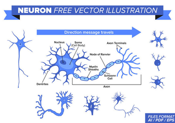Neuron Free Vector Illustration - Kostenloses vector #375859