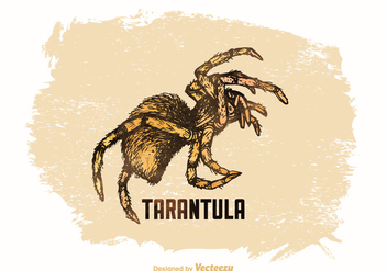 Free Vector Drawn Tarantula - бесплатный vector #379519