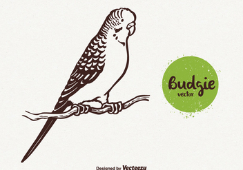Free Budgie Vector Illustration - бесплатный vector #380669