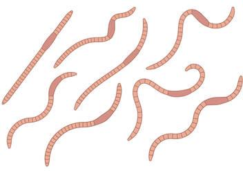 Earthworm Vector Set - vector gratuit #383829