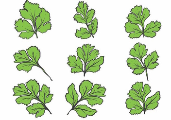 Hand Drawn Cilantro Icon Set - vector gratuit #384139