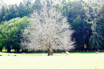 Ghost Tree - image #385139 gratis