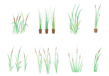 Free Cattails Vector - Free vector #385619