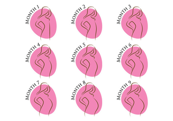 Pregnancy Stages - Free vector #386079