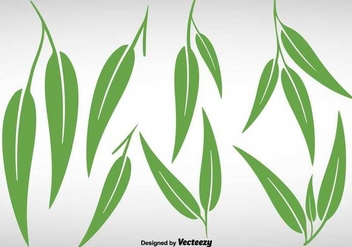 Collection Of Eucalyptus Leaves - Vector - Free vector #386529