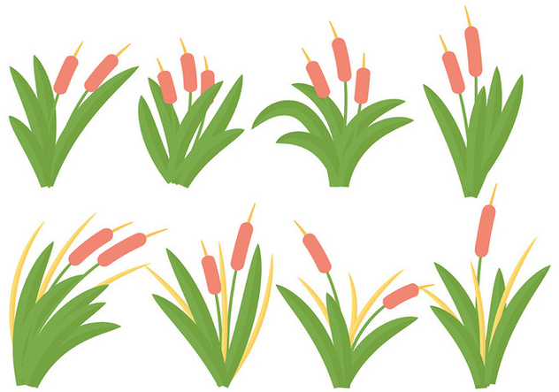 Free Cattails Icon Vector - Free vector #388349