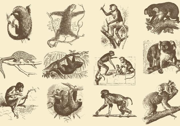 Vintage Illustrations Of Animals Free Vector Download 388849