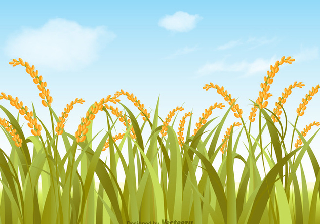 Free Vector Rice Field Illustration - Kostenloses vector #392339