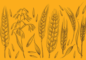 Hand Drawn Oat Sketches - vector gratuit #392789