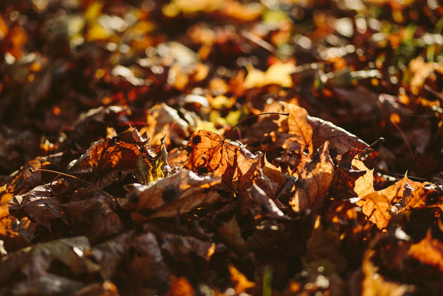 Autumn leaves - Free image #393229