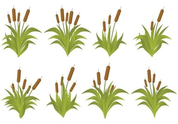 Free Cattails Vector Set - vector #393799 gratis