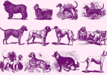 Vintage Purple Dog Illustrations - Free vector #395179
